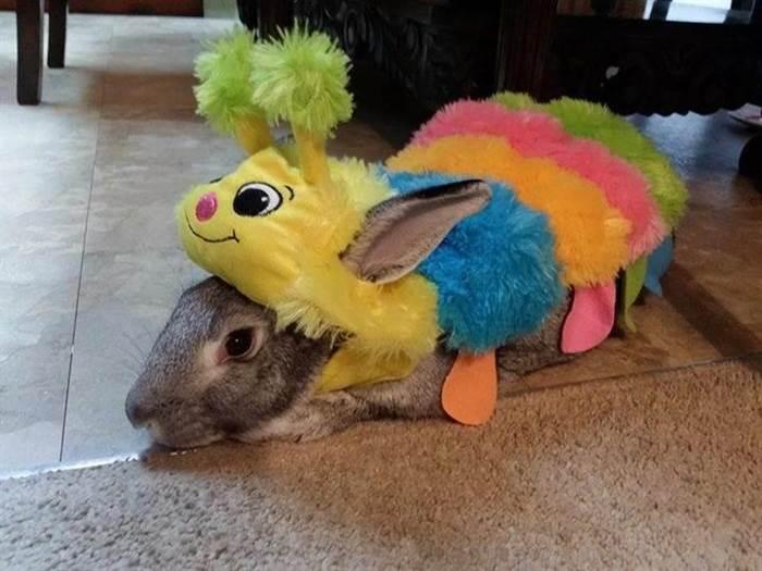 Funny Pet Cosplay Photos